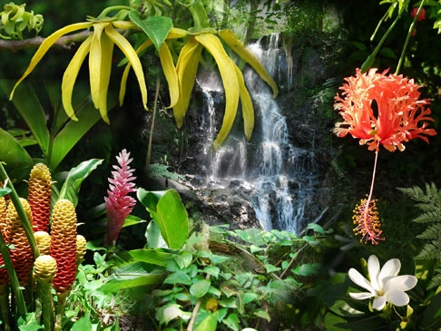 Fleurs Plantes Fruits A Tahiti Polynesie